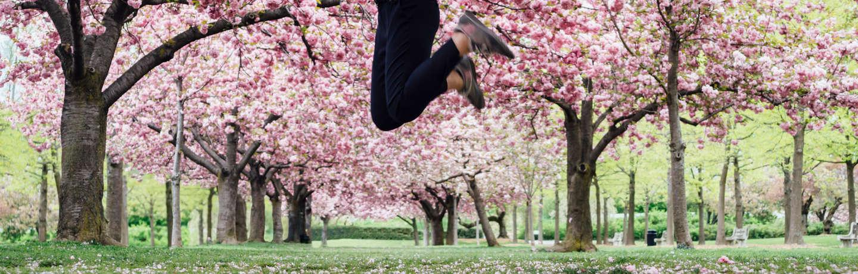 The Embassy Row Hotel_National Cherry Blossom Festival Photo_Stocksy Images