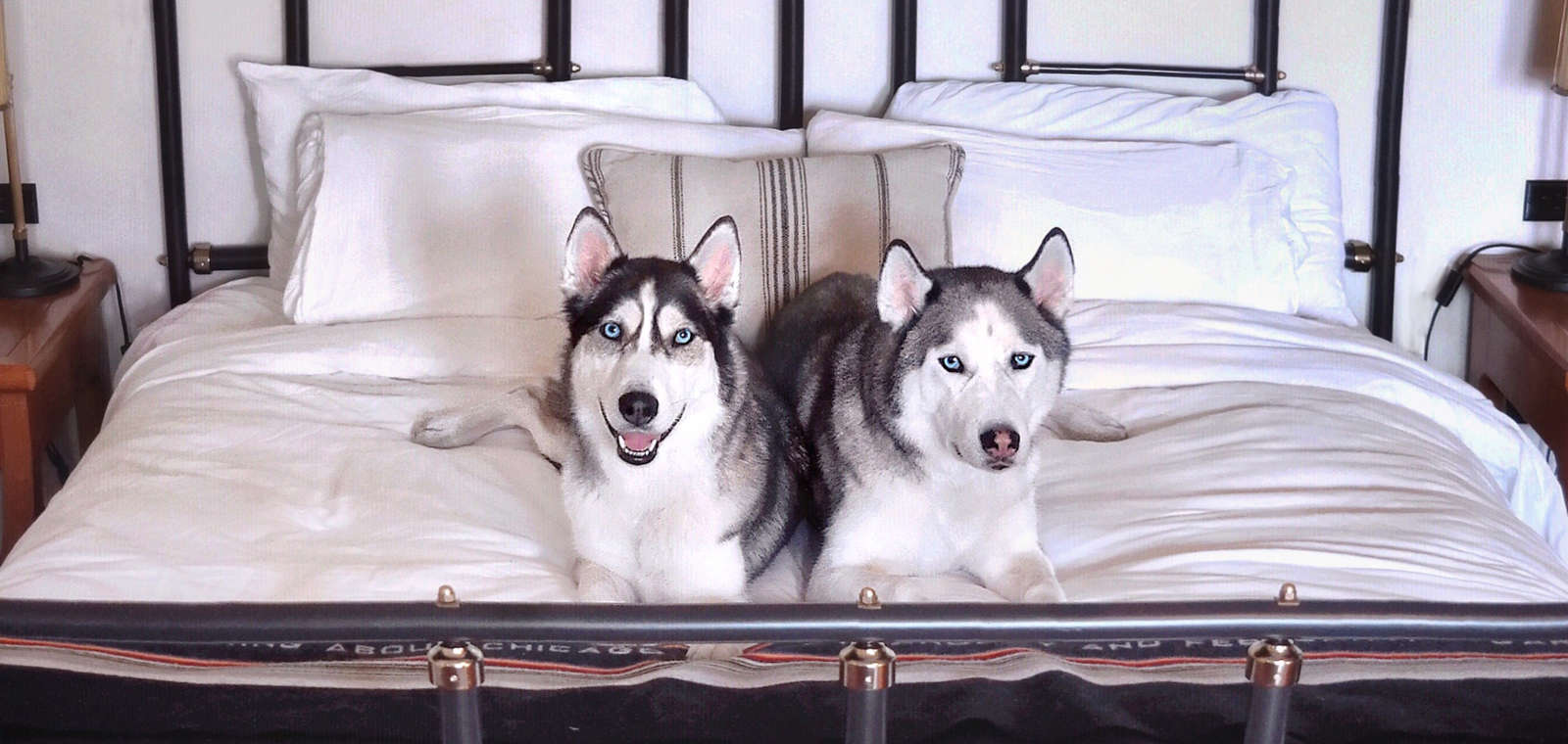 SAMSUNG CSC Shot by AJ Trela; two huskies on guestroom bed, in promotion of Most Valuable Pup Pet Package