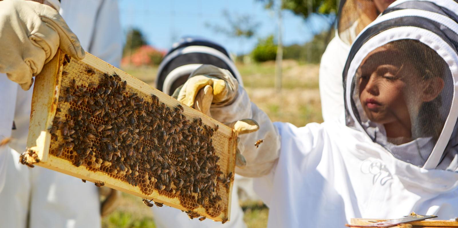 Carmel Valley Ranch_Activities_World of Bees_child_little girl_1641_GJ