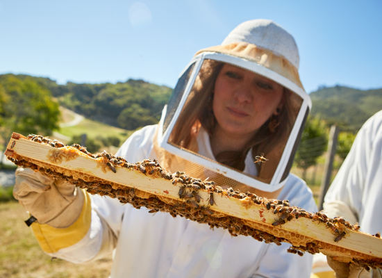 Carmel Valley Ranch_Artisan_beekeeper_Mariah_holding frame_1754 1_GJ