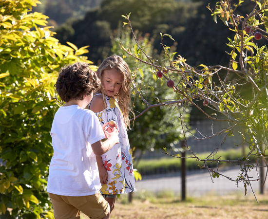 Carmel Valley Ranch_Lifestyle_Play_boy and girl_Organic Garden_picking fruit_1437 1_GJ