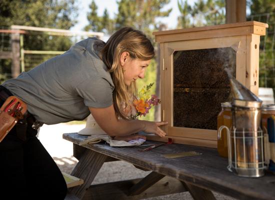 Carmel Valley Ranch_Organic Garden_Apiary_bee keeper_Mariah_honey table_38_PD