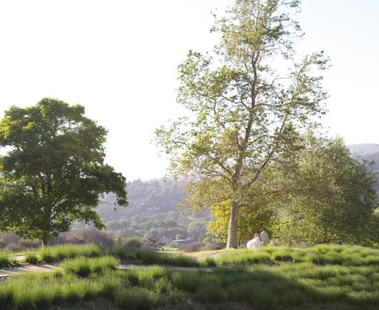 Carmel Valley Ranch_Weddings_bride and groom on lavender walking path