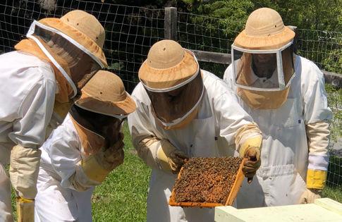 Carmel Valley Ranch_Activities_World of Bees-0980_SL