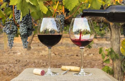 Carmel Valley Ranch_Stock_Vineyard_pouring wine in vineyard