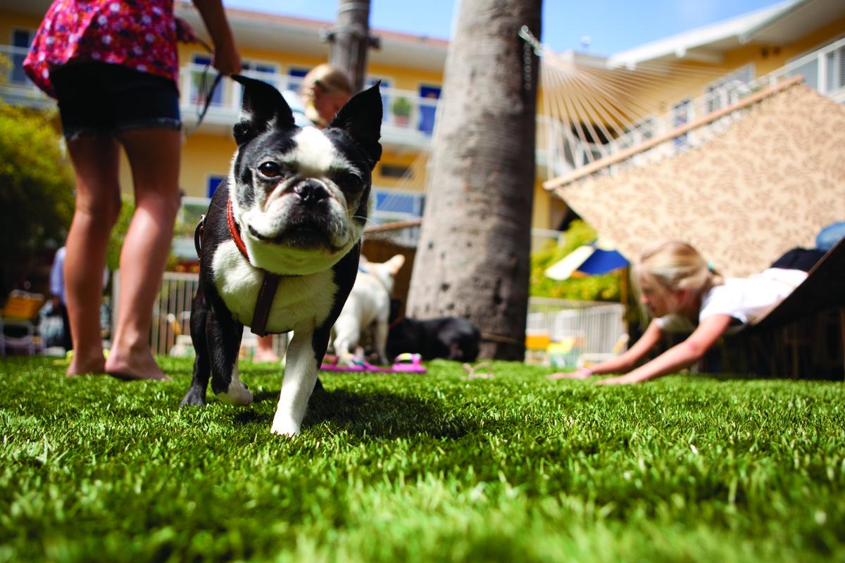Hotel Del Sol Lifestyle Courtyard Pet Friendly PD