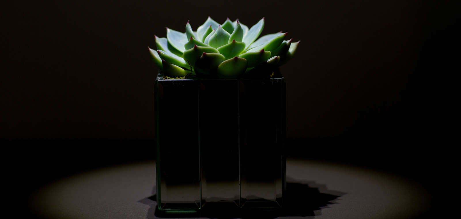 Succulent Plant In Low Light