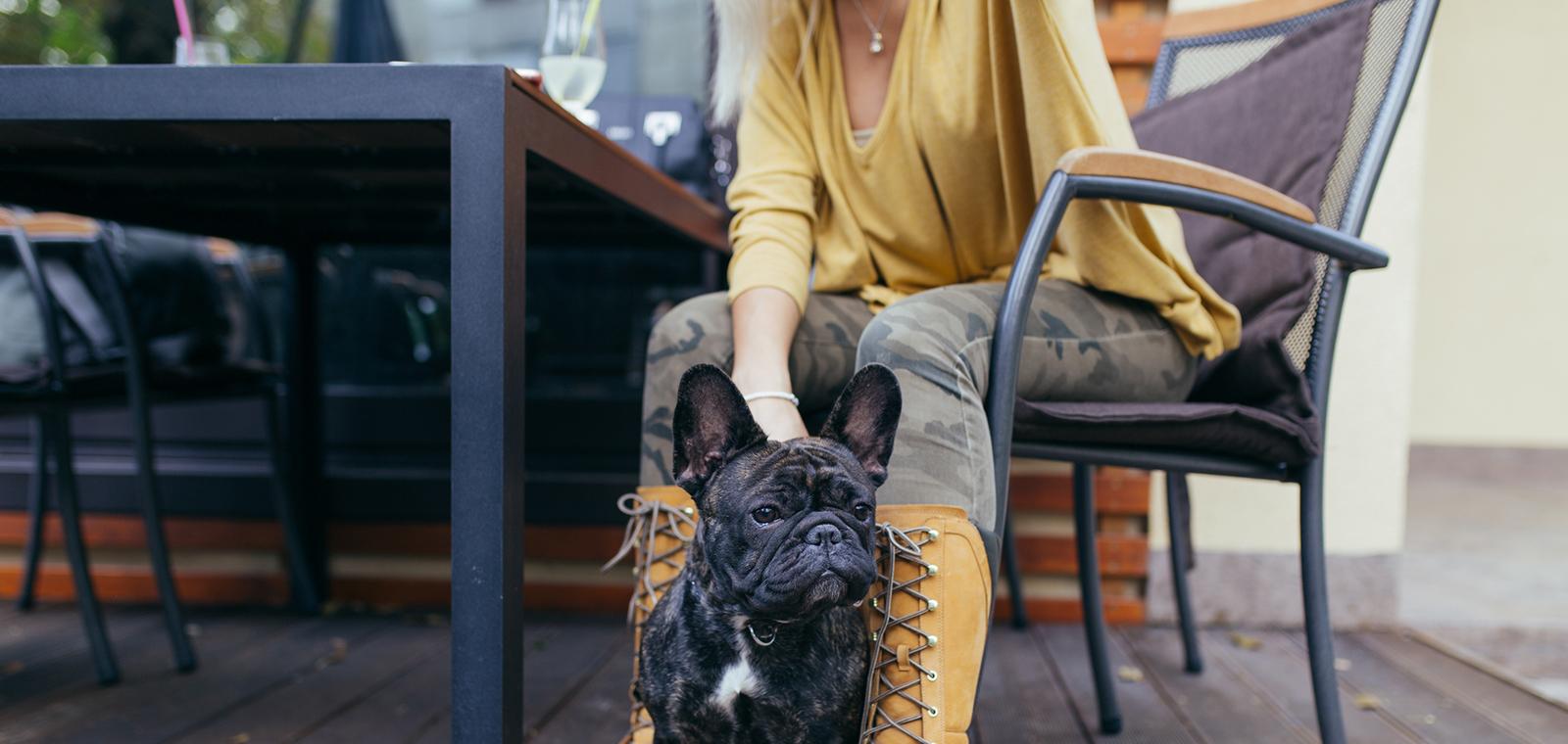 6 Dog-Friendly Restaurants in Chicago