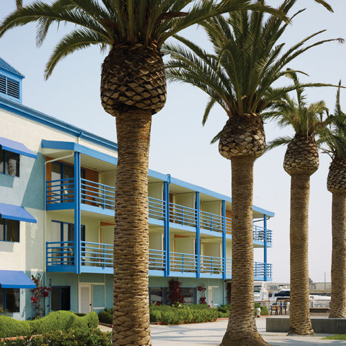 Waterfront Hotel Exterior & Palm Trees
